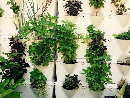 Et si vous plantiez des fleurs et des herbes comestibles pour sublimez vos plats