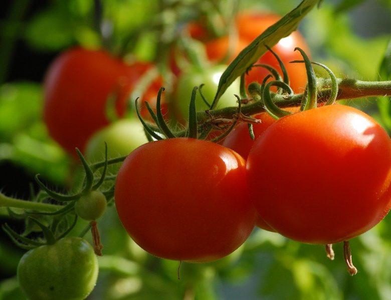 Avoir un potager chez soi, quels légumes planter?