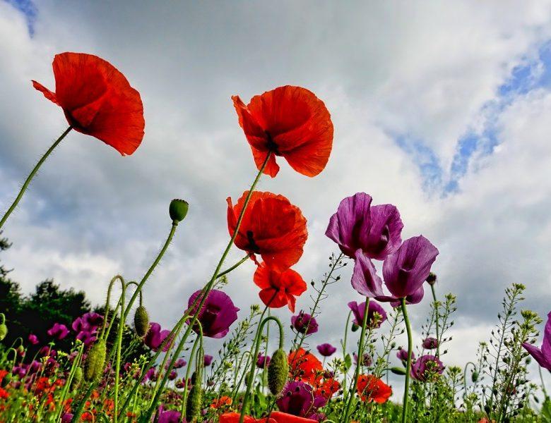 Plantes: envie de beauté et de couleurs florales dans votre jardin?