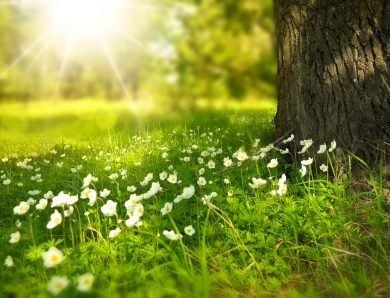 Un tableau floral bien exposé durant toute l'année