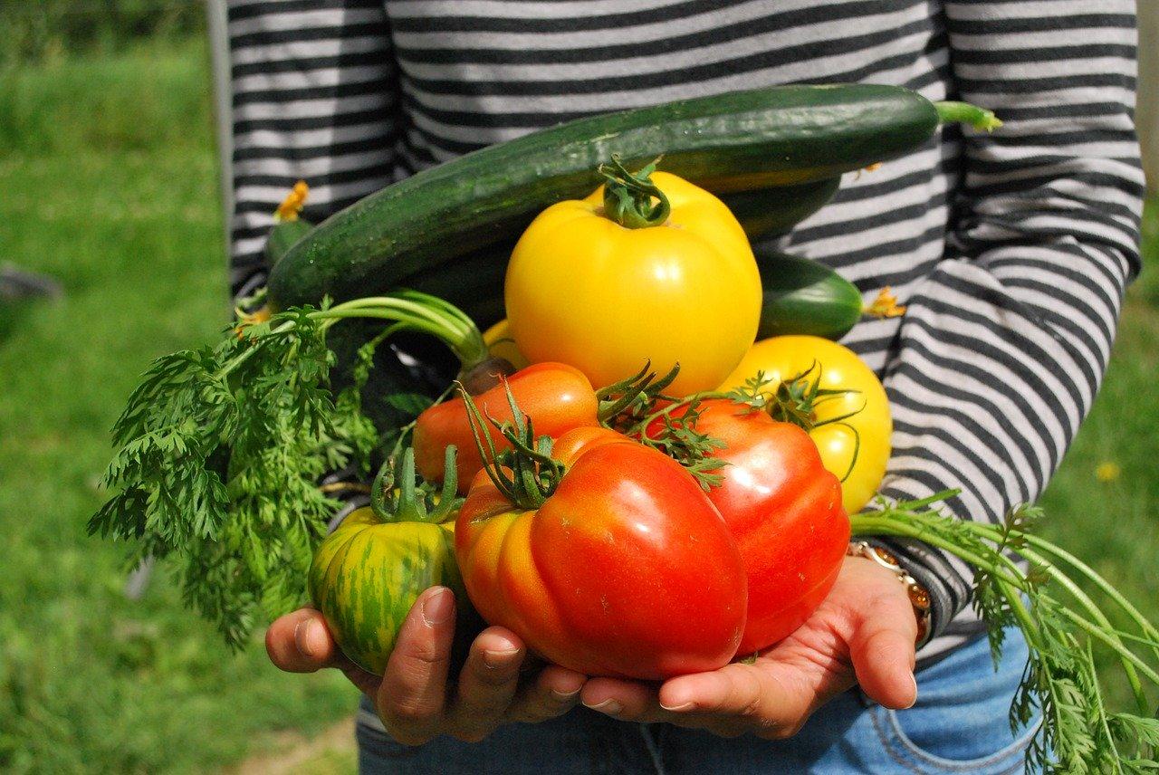 Avoir son propre potager: Quels légumes planter?