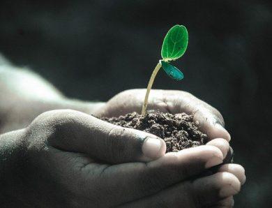 Comment mieux s'occuper de ses plantes en mois d'août ?