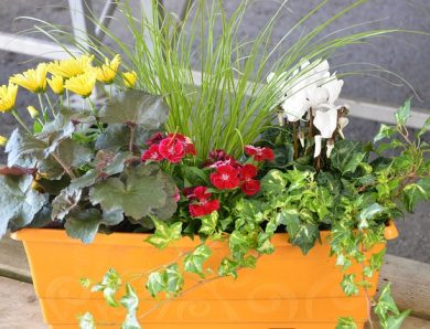 Une jardinière : comment bien la choisir ?